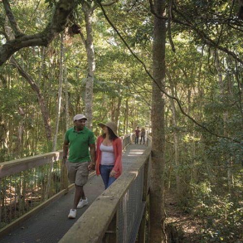 Rainforest walk, Sea Acres National Park